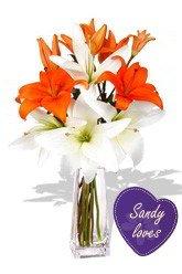 Sandy Loves Amber Eyes