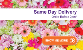 Order by 2pm for Same Day Delivery!<a href='/customer-service/delivery-guide/' title='* Conditions Apply' style='color:white;'>*</a>
