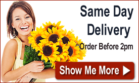 Order by 2pm for Same Day Delivery!