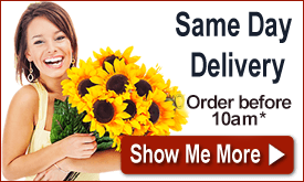 Order by 10am for Same Day Delivery!<a href='/customer-service/delivery-guide/' title='* Conditions Apply' style='color:white;'>*</a>
